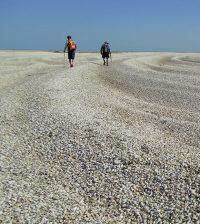 colorado river delta clams carbon