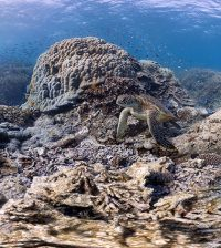 coral reef atmospheric carbon dioxide ocean acidification