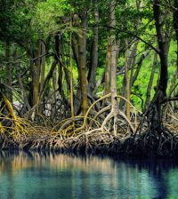 mangroves everglades national park