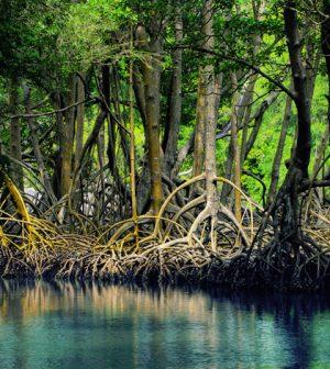 mangroves everglades national park