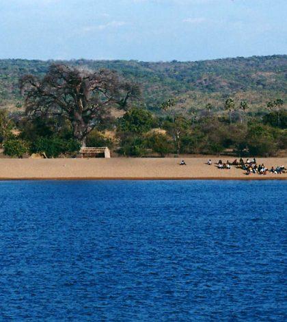 sediment cores cichlid diversity lake malawi