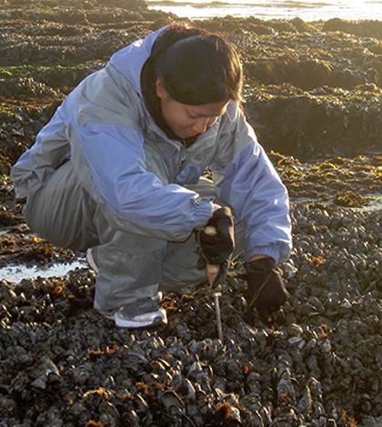 levels of microcystin shellfish san francisco bay
