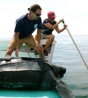 underwater cameras TurtleCam
