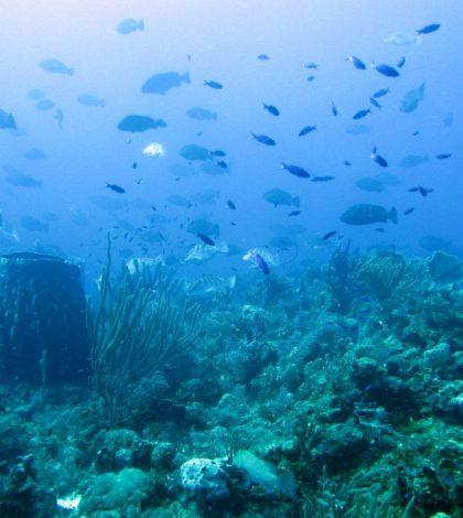 fish sound