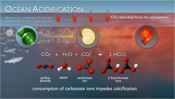CO2 Cacophony