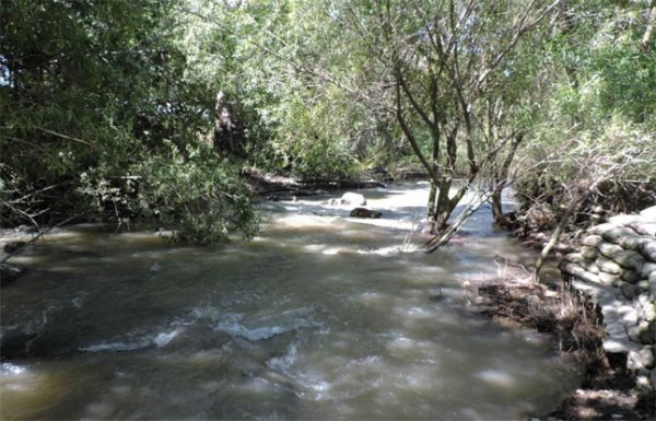 Coyote Creek Steelhead Trout