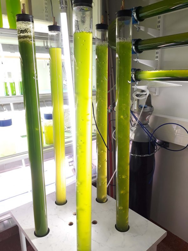 Treating Wastewater with Microalgae