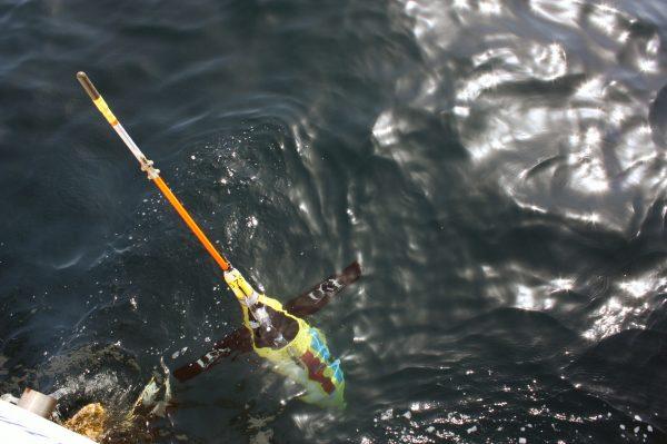 seagliders