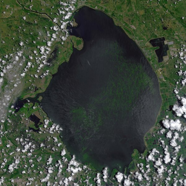 Florida's Algal Blooms