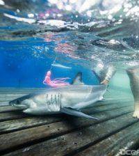 shark nursery