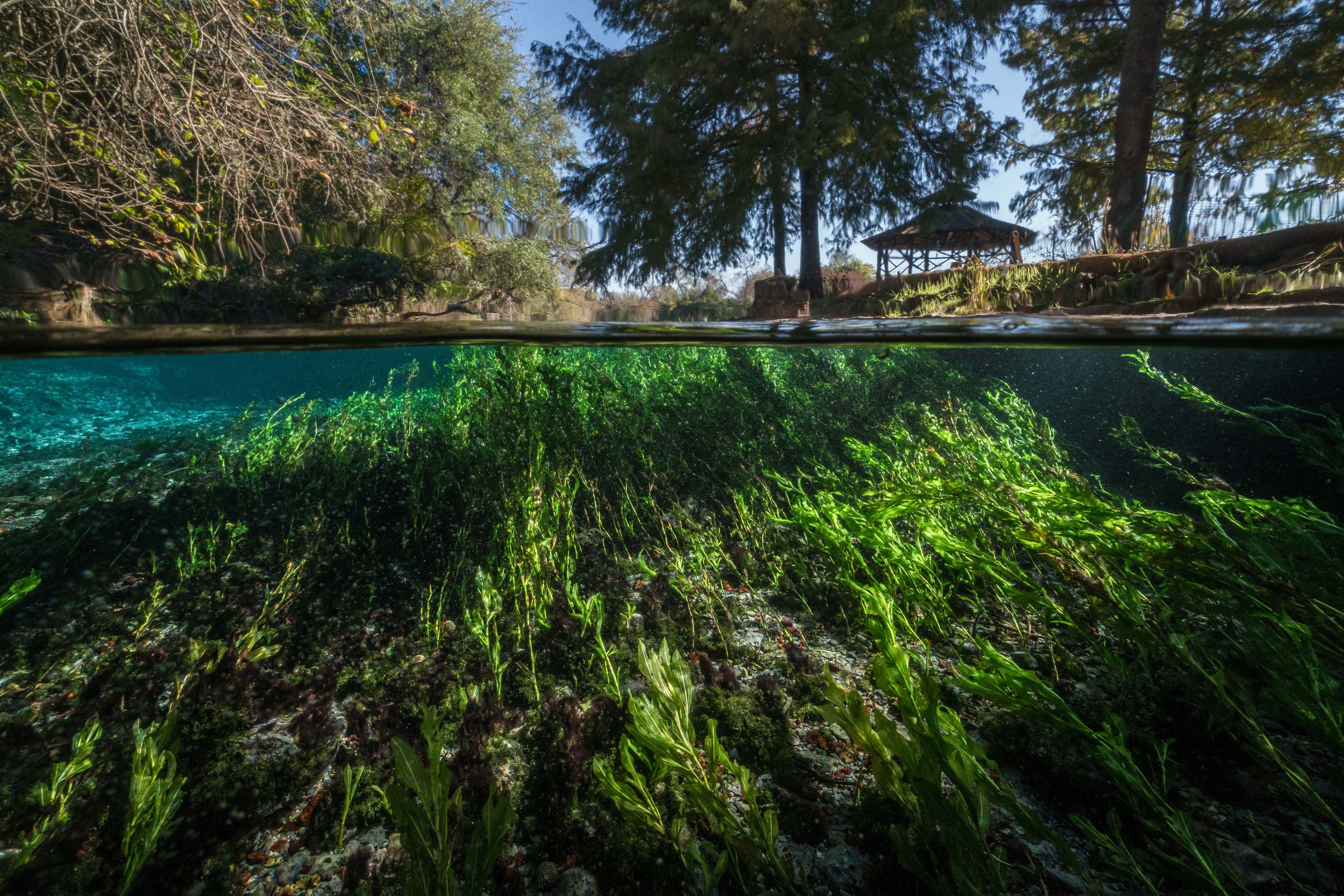 Environmental Monitor | Managing and Studying Texas's Edwards Aquifer