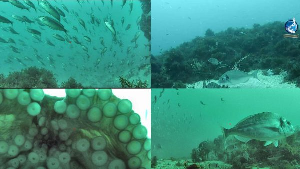 underwater webcam