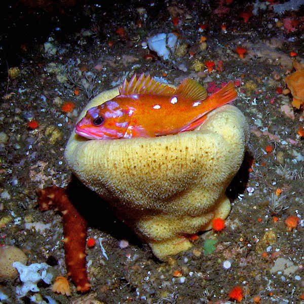 Environmental Monitor | Greater Farallones National Marine