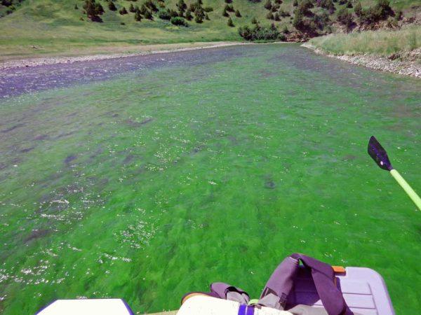 smith river algae