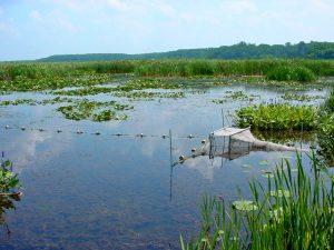 Great Lakes wetlands