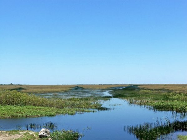 peatlands research