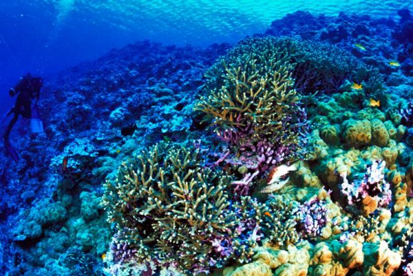 Sewage and coral reefs