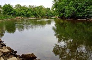 tidal freshwater nitrogen